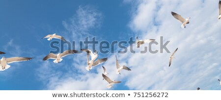 gaviota · vuelo · hermosa · agua · cielo - foto stock © njnightsky