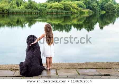 ブラウン ニューファンドランド島 犬 孤立した 白 ストックフォト © eriklam