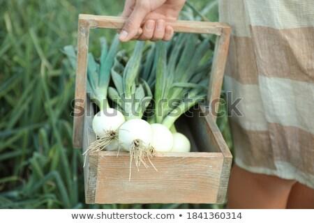 Onions basket  Stock photo © Makse