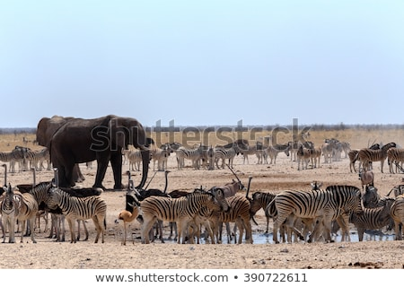crowded waterhole with elephants zebras springbok and orix stock photo © artush