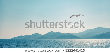 seagull flying over the sea stock photo © goce