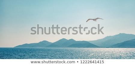 чайка Flying морем океана птица синий Сток-фото © goce