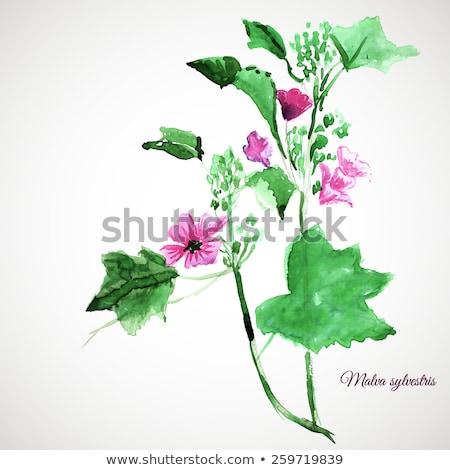 花 水彩画 絵画 ピンク 黄色 孤立した ストックフォト © artibelka