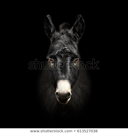 肖像 黒 ロバ 顔 カップル ストックフォト © Hofmeester