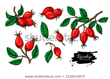 Colorful rosehips stock photo © olandsfokus