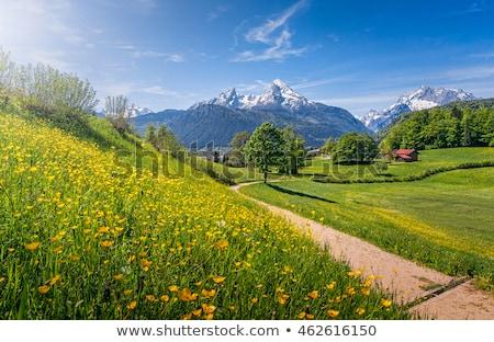 пути Альпы лес горные дерево пейзаж Сток-фото © w20er