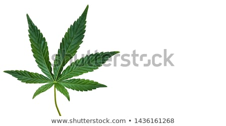 cannabis leaf designs stock photo © Zuzuan