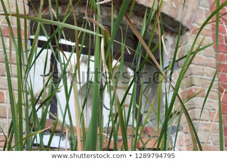 a closed window near the pond stock photo © bluering