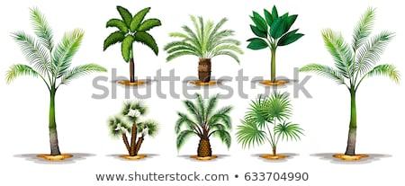 различный · тип · вектора · деревья · набор · весны - Сток-фото © morrmota