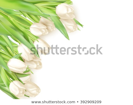 bouquet of tulips eps 10 stock photo © beholdereye