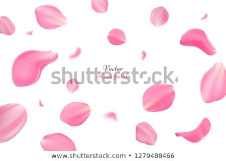 roze · vliegen · bloemblaadjes · sakura · eps · 10 - stockfoto © beholdereye