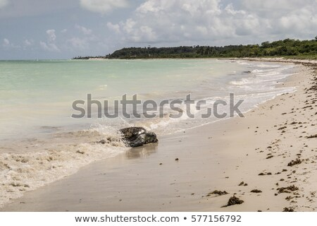 tortoise stranded at the beach at Ponta Preta in the island of C Stock photo © meinzahn