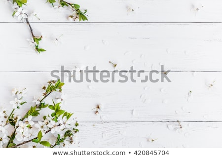 branch of a blossoming tree on a white wooden background stock photo © kotenko