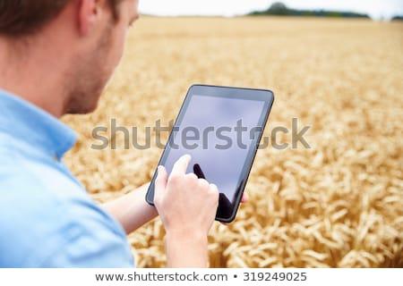 Stockfoto: Landbouwer · digitale · tablet · tarwe · gewas · veld
