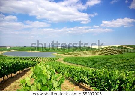 Agricola campi regione cielo primavera natura Foto d'archivio © inaquim