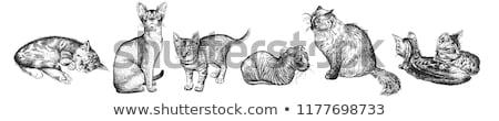 cute · mały · kotek · charakter - zdjęcia stock © popaukropa