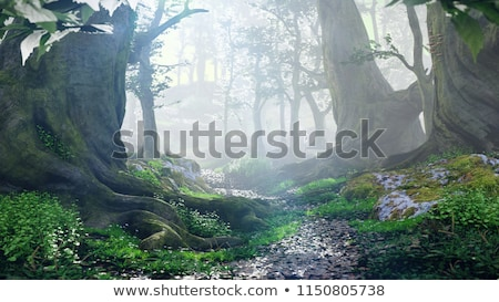 beautiful peaceful Landscape; Old tree in the old magic park Stock photo © Konstanttin