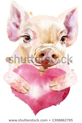 Watercolor portrait of mini pig with pink heart Stock photo © Natalia_1947