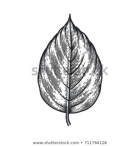 осень тополь листьев баннер осень лист Сток-фото © sonia_ai