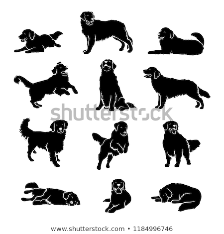 vector set of dog, golden retriever stok fotoğraf © olllikeballoon