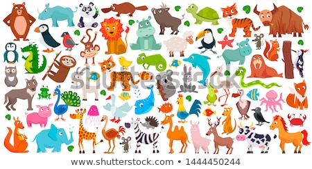set of kangaroo character stock photo © bluering