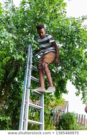 chłopca · wspinaczki · drzewo · młody · chłopak · liściastych · pokryty - zdjęcia stock © kzenon