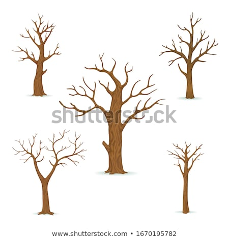 Leafless Plant, Tree with Empty Branches Vector Stock photo © robuart