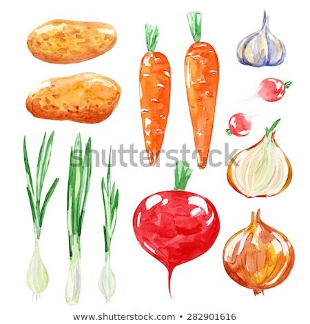 Raíz zanahoria hortalizas vector vegetales aislado Foto stock © robuart