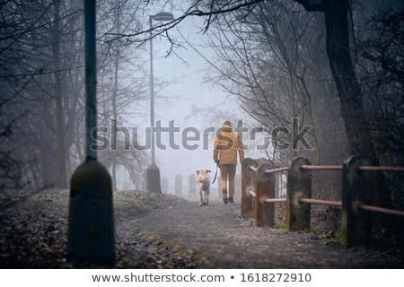 Homem caminhada cão coleira inverno cidade Foto stock © robuart