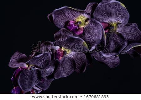Sekiz siyah orkide numara dekore edilmiş altın Stok fotoğraf © blackmoon979