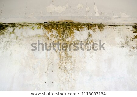 Beschimmeld muur gedetailleerd afbeelding achtergrond Stockfoto © trgowanlock