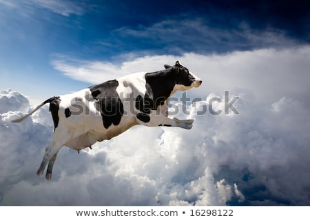 Stock fotó: Repülés · tehén · izolált · fekete · farm