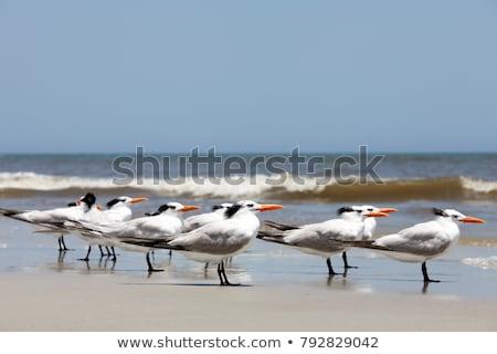 ロイヤル · 飛行 · 空 · 鳥 · アフリカ · 翼 - ストックフォト © suerob
