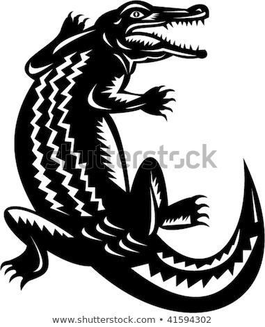 Jacaré dentes nadar lagarto assustador balança Foto stock © xochicalco