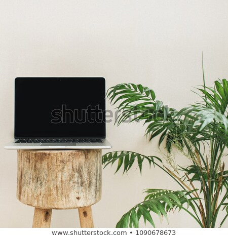 beautiful female in front of palm leaf stock photo © dash