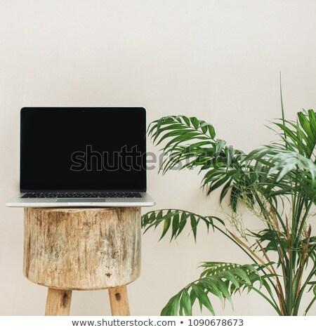 женщину · купальник · пальмовых · листьев · три · четверти · длины · выстрел · красивой - Сток-фото © dash