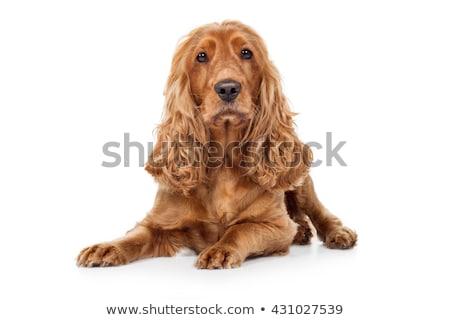 hongerig · huisdieren · witte · hond · groep · dier - stockfoto © yuliang11