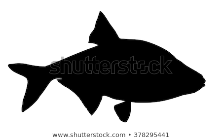 Silhouette of bream stock photo © perysty