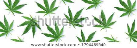 Green hemp floral seamless background, cannabis leaf background texture. Vector marijuana leaves ill Stock photo © Hermione