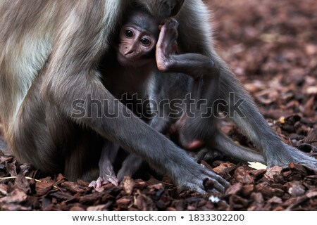 Cute baby being breastfed by her mother Stock photo © wavebreak_media