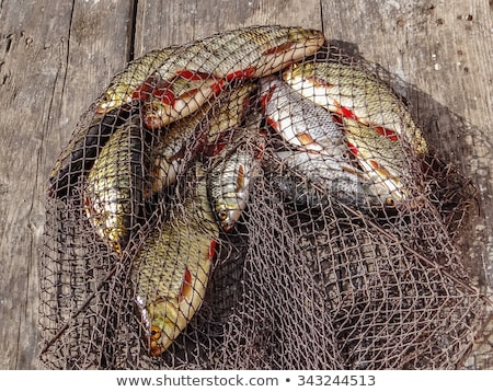 Fishing net poachers Stock photo © Pruser