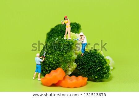 Szobrocska gazdák aratás brokkoli étel férfi Stock fotó © Kirill_M