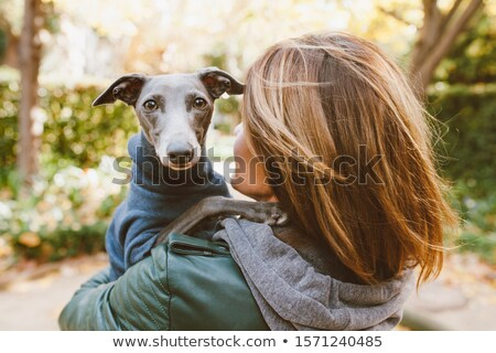 retrato · italiano · galgo · pormenor · cão · grama - foto stock © CaptureLight