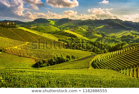 View on vineyards in northern Italy. Stock photo © rglinsky77
