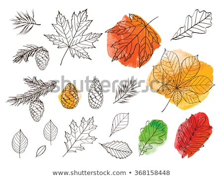 Green watercolor painted vector ash tree leaf Stock photo © gladiolus