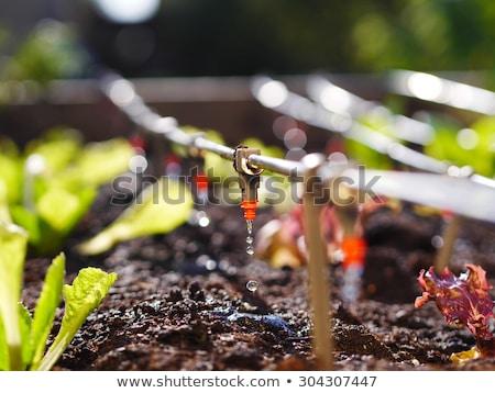 Nawadnianie zielone roślin plastikowe odkryty Zdjęcia stock © Lio22