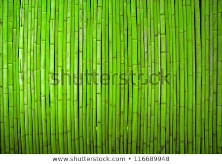 Geel oude bamboe bos drogen seizoen Stockfoto © bubutu