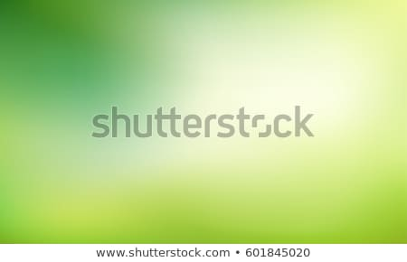 Stock photo: Fresh Summer Leaves on Blurred Green Background