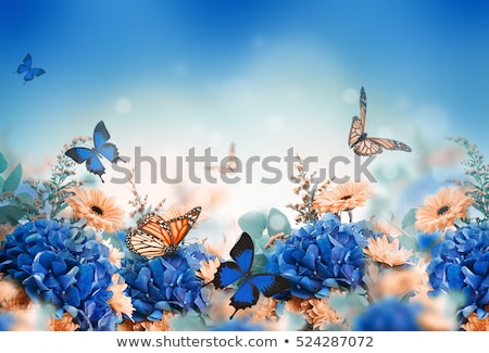 white butterfly on blue flower stock photo © everelative