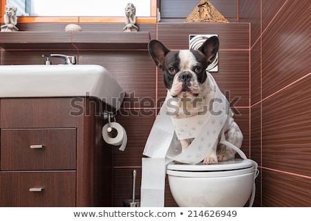 Foto stock: Dog On Toilet Seat